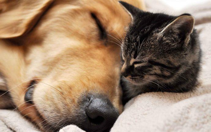 Los científicos afirman que los perros y gatos sueñan con sus dueños cuando duermen