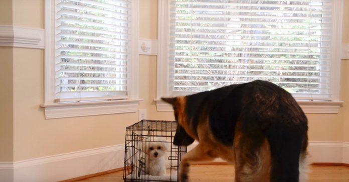 perros camara videos