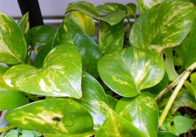 La NASA lanza 12 plantas imprescindibles que hay que tener en cualquier hogar