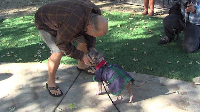Un bombero encuentra un cachorro enfermo abandonado bajo la lluvia y le da un nuevo hogar