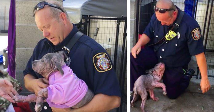 un bombero encuentra un cachorro enfermo abandonado bajo la lluvia y le da un nuevo hogar banner