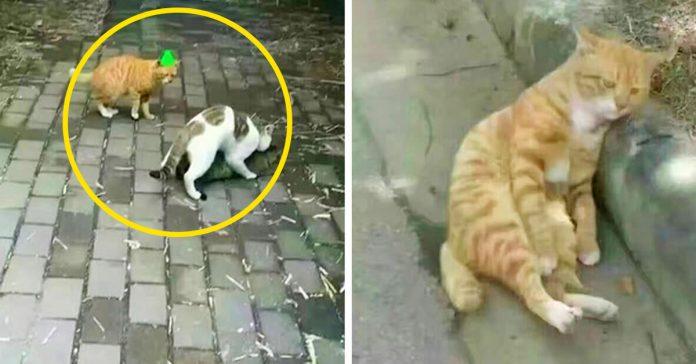 un gato encuentra a su gata enganandole con otro su reaccion ha dado la vuelta al mundo banner