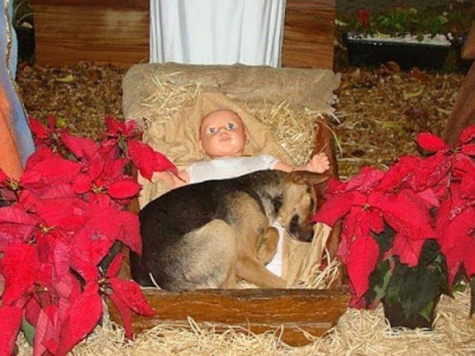 Un perro se quedó dormido en un belén y se produjo el milagro de la Navidad