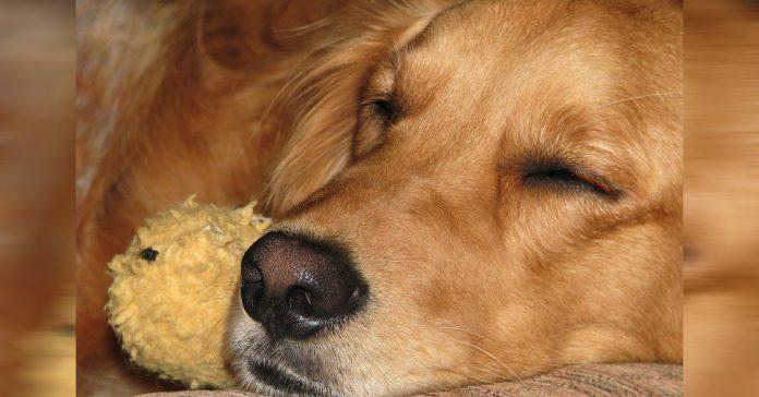 un perro entra todos los dias en su casa para dormir hasta que una nota en su collar desvela por que banner