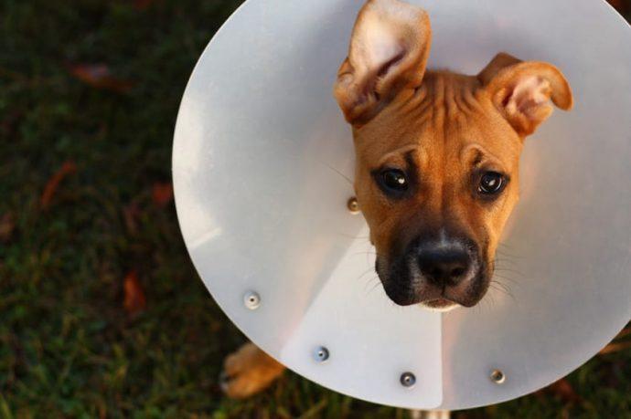10 Cosas que nunca deberías hacerle a tu perro