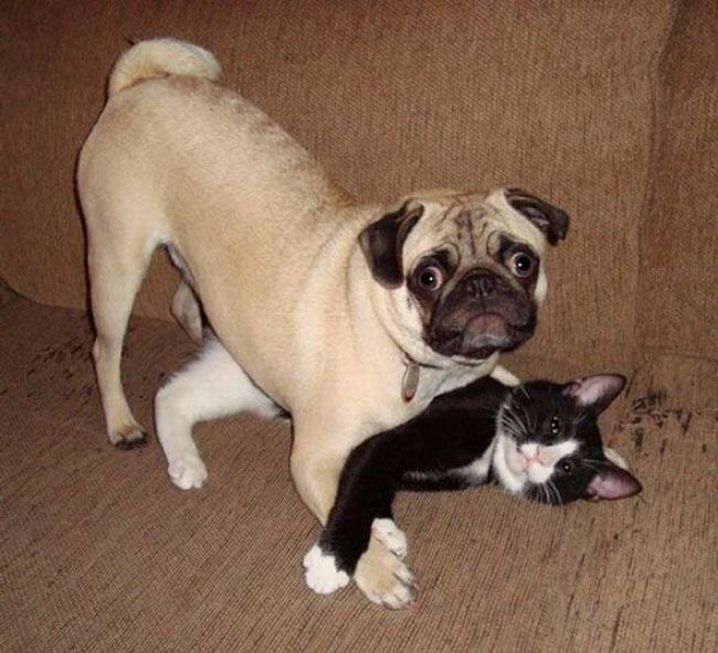 16 Mascotas pilladas con las 'patas' en la masa antes de salirse con la suya