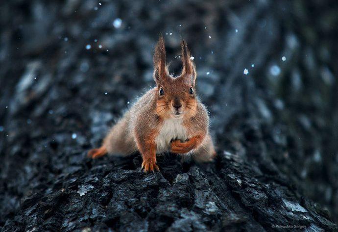20 Increíbles retratos de animales que no te dejarán indiferente