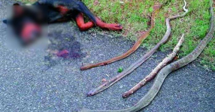 aullido perro en medio de la noche atacando cobras banner