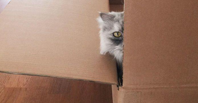 dicen que es el gato mas bello del mundo banner