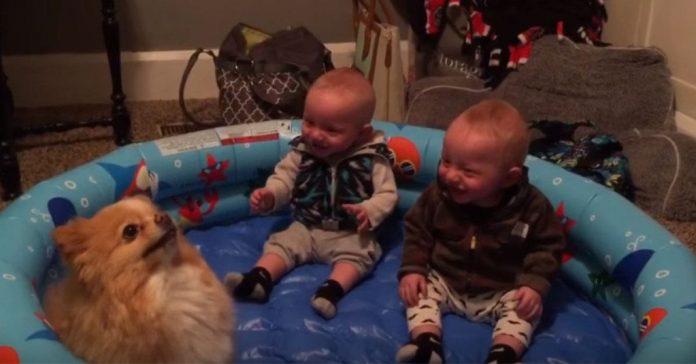 dog makes babies laugh 1024x535