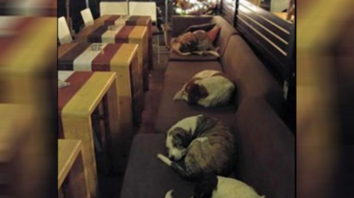 dogs in cafe