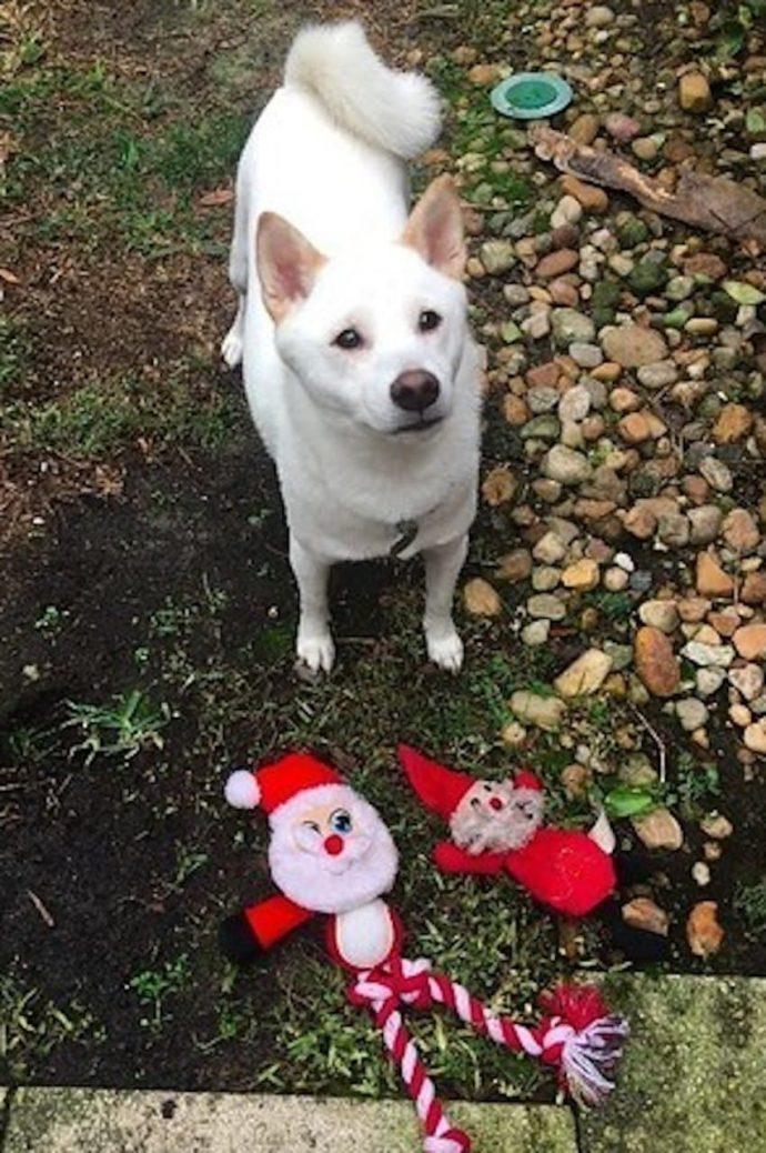 Este perro se volvió loco de alegría al conocer a Papá Noel