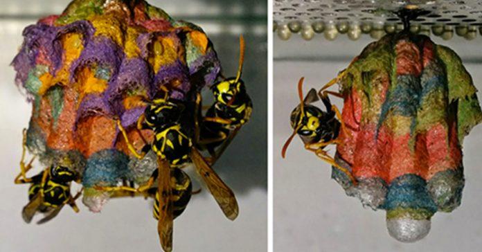 estas avispas crean unos increibles nidos que jamas habias visto banner