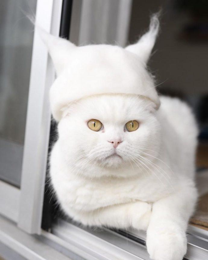 Estos gatos aprovechan su propio pelo para estar a la última moda