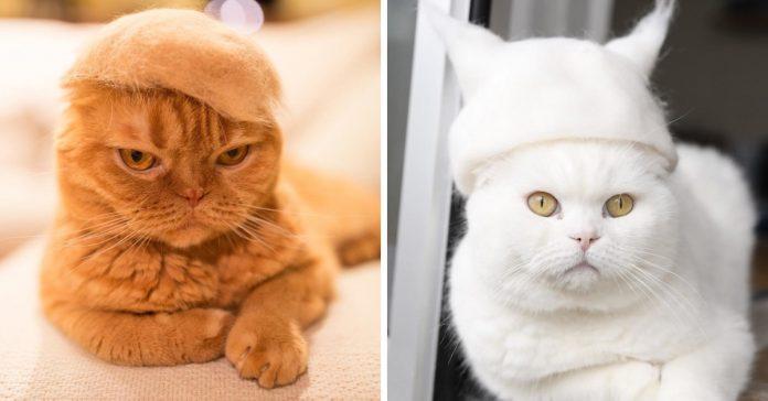 estos gatos aprovechan su propio pelo para estar a la ultima moda banner