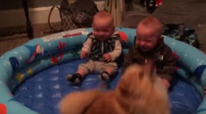 Este perro provocó la incontrolable risa de unos gemelos con sus saltos en este adorable vídeo