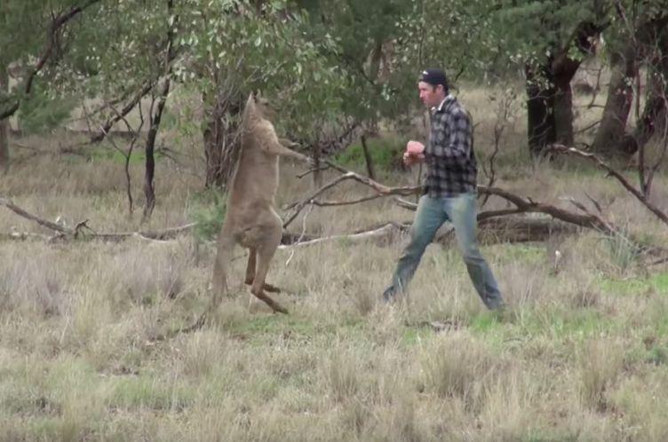 Un hombre se viraliza al dar un puñetazo a un canguro que estaba estrangulando a su perro
