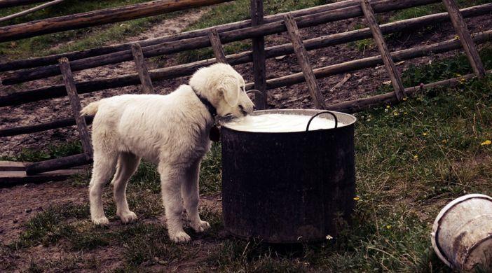 8 Alimentos que nunca debes dar de comer a tu perro