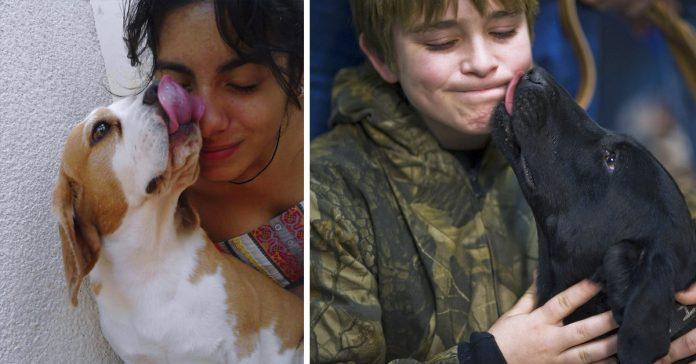 la ciencia demuestra por que no deberias dejar que tu perro te lama la cara banner