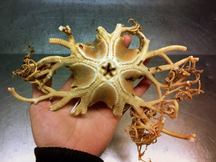 19 terroríficas criaturas del fondo del mar