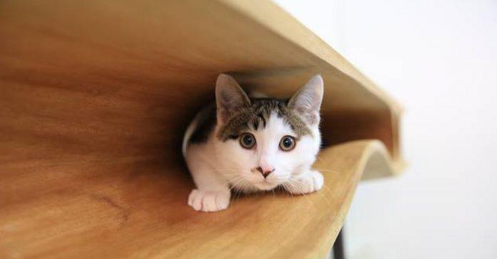 mesa para gatos banner