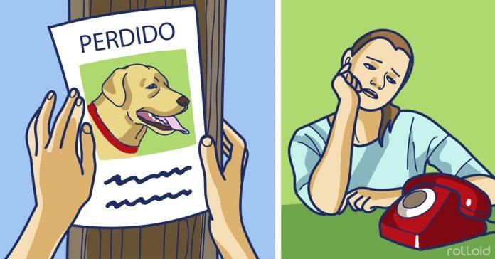 pasos seguir perder perro banner