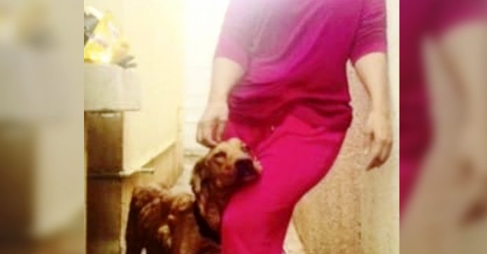 perro cancer bultos