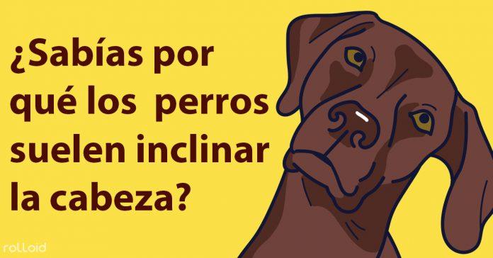 por que los perros inclinan la cabeza