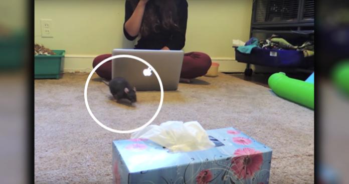 rat sneeze