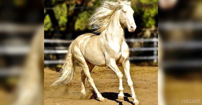 razas increbiles caballo