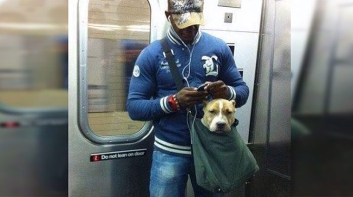 subway dog