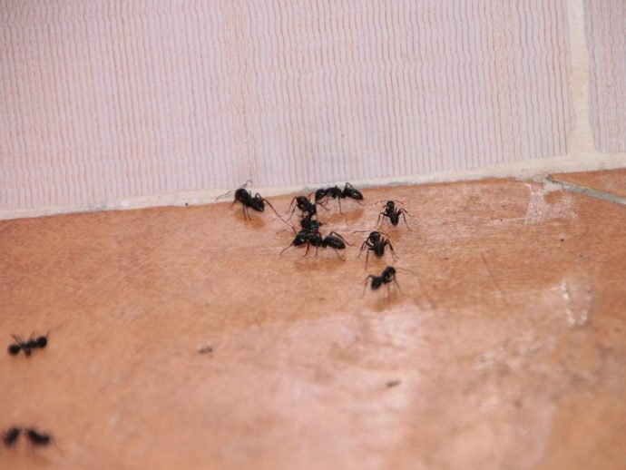 Cómo eliminar hormigas: El truco para acabar con ellas con un ingrediente