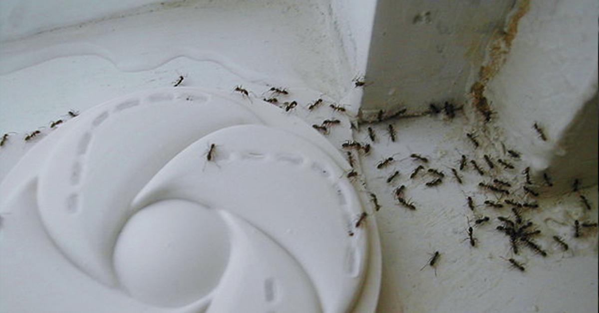 tienes una invasion de hormigas en casa te ensenamos como eliminarlas de forma rapida y sencilla banner