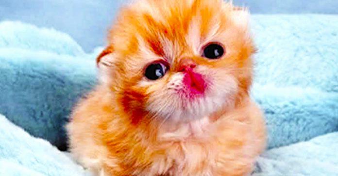 ultraman gato muneco