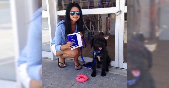 volo mas de 10 000 kilometros para ver a este perro despues de que el le hubiera salvado la vida banner
