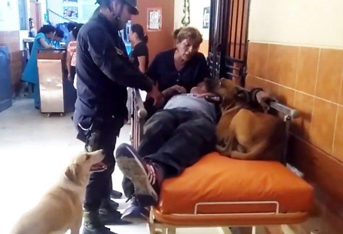 Los perros de este hombre suben a la ambulancia para tranquilizarlo de camino al hospital