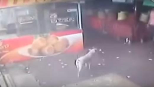 Este hombre recibe una dosis de karma instantánea justo después de intentar golpear a un perro en la calle