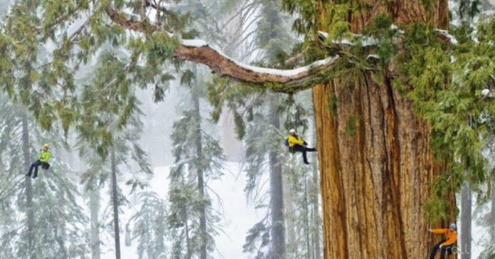 sequoia grande fotografia banner