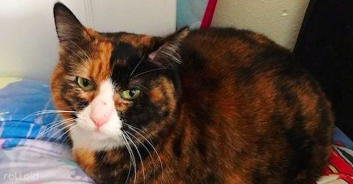un gato de un refugio abraza a la mujer que salvo su vida banner