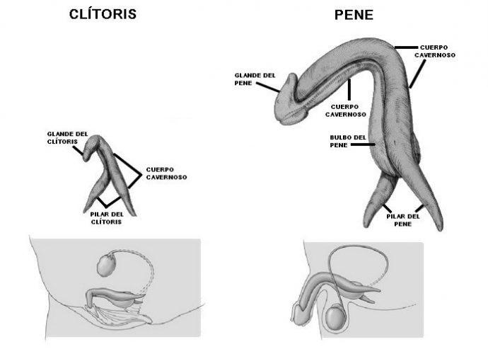 10 Cosas que seguramente no sabías acerca del clítoris y que te van a sorprender