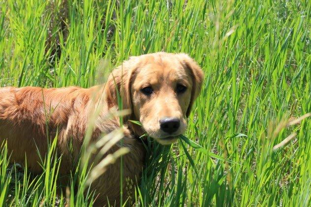 9 grandes mentiras sobre los perros que todos pensábamos que eran verdad