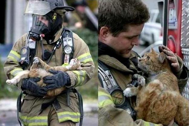 18 imágenes de bomberos rescatando a animales que enternecerán tu corazón