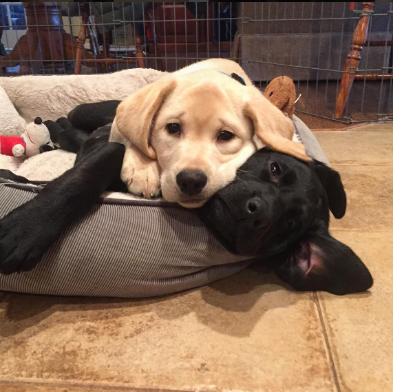 21 perros demasiados buenos y adorables como para ser reales