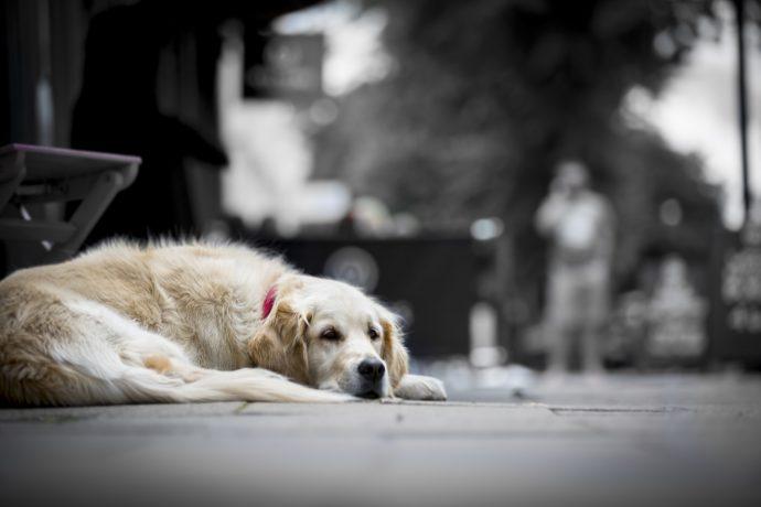 8 Cosas que tu mascota odia que hagas y pocas personas saben