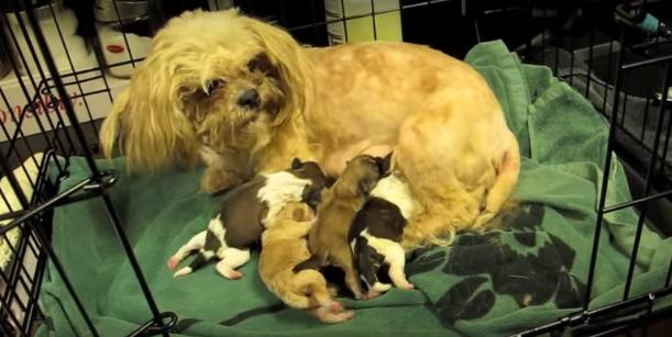 Esta madre perrita se reúne con sus preciosos bebés. Su reacción es adorable