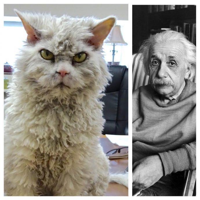 Descubre al gato más enfadado del mundo con estas fotografías