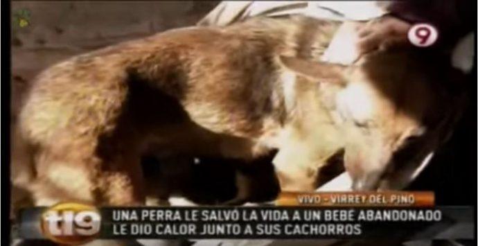 Esta perra utilizó sus instintos maternos para mantener vivo a un bebé abandonado