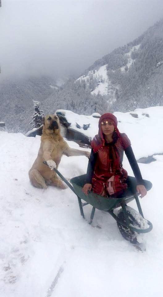 Esta chica y su perro salvaron la vida de una cabra y su cría recién nacida