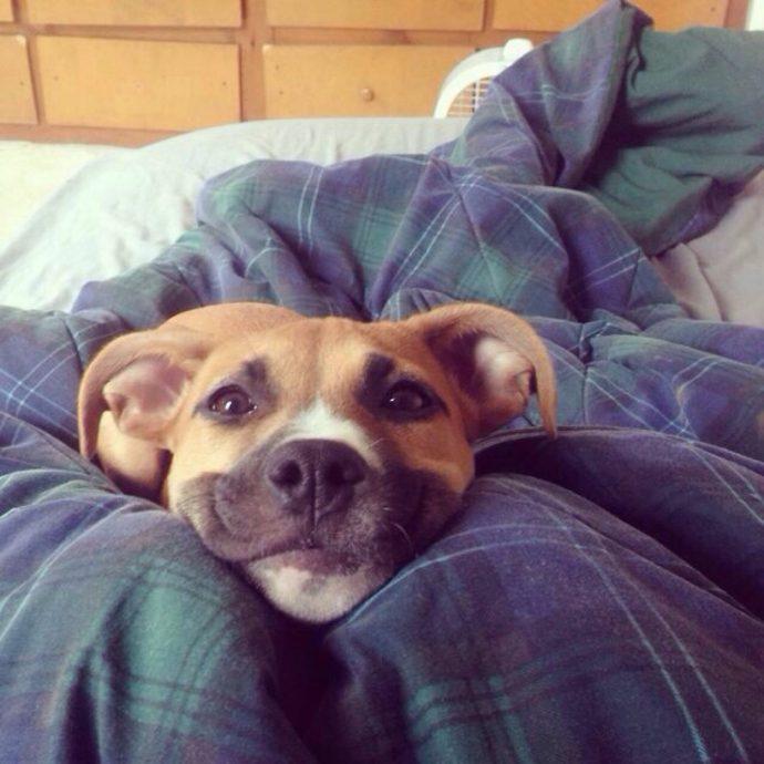 Estas fotos de animales te sacarán una sonrisa