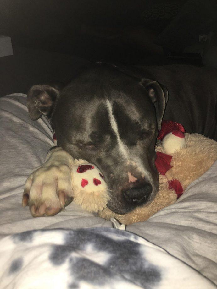 Este perro se quedó llorando después de que sus dueños le dejaran en el refugio de animales